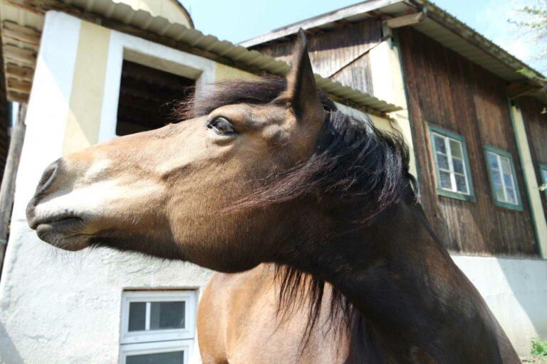 Pferd vor dem Haus der Grissenberger